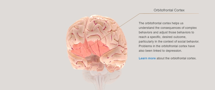 screenshot_OrbitofrontalCortex