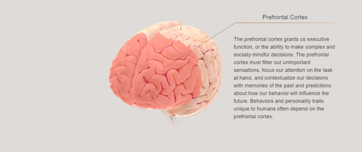 screenshot_PrefrontalCortex
